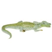 alligator keylime