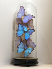 Butterfly Dome Blue